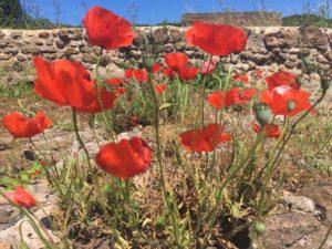 Flowers amongst ruins